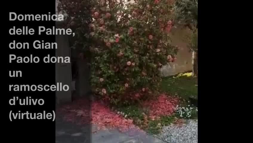 Video: Un ramoscello d'ulivo (virtuale) per la Domenica delle Palme