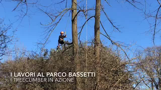 """Video: Gli scalatori al parco Bassetti con la tecnica del treeclimbing: """"È la prima volta qui"""""""