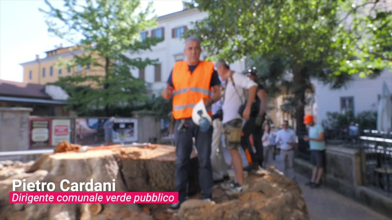 Video: Dal Cedro al Ginkgo: il comune si prepara all'arrivo del nuovo Piantone di via Veratti