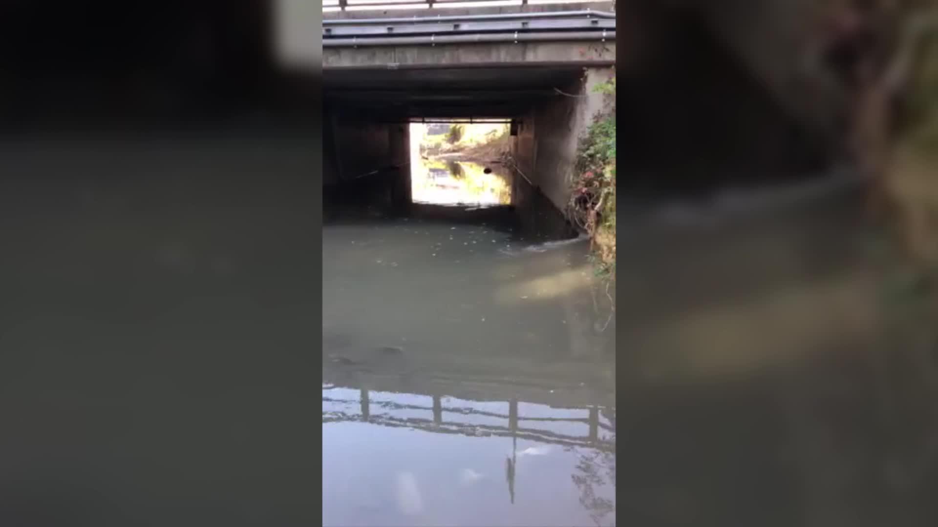Video: Scarico inquinante nell'Arnetta
