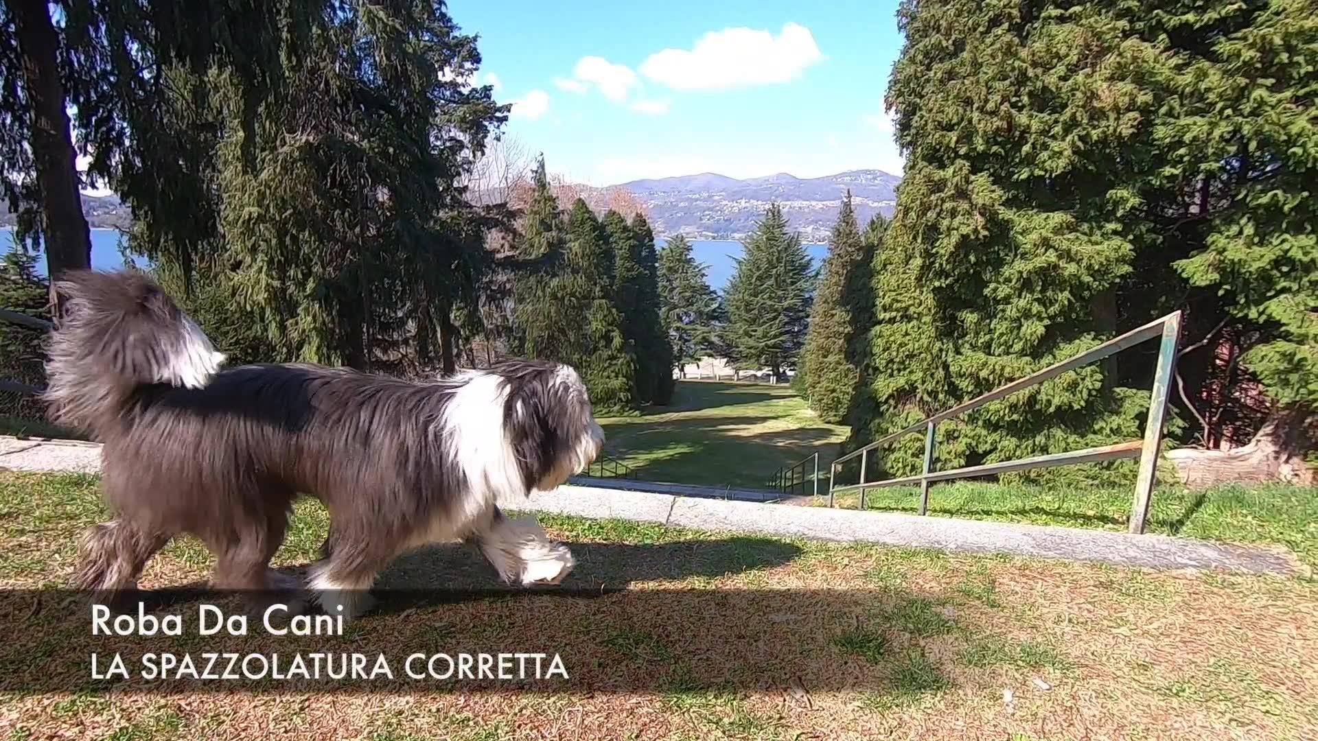 Video: Come spazzolare il cane nel modo giusto