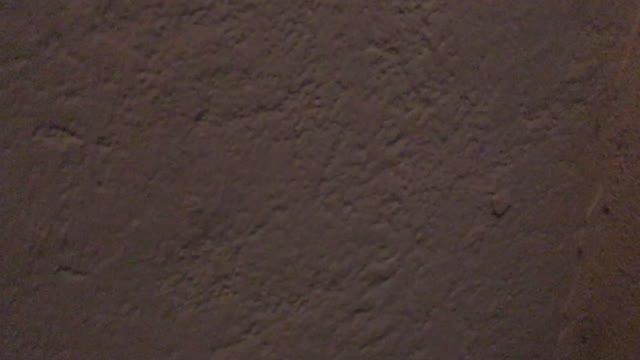 """Video: Il """"Mannequin Challenge"""" dei Gorillas Varese"""