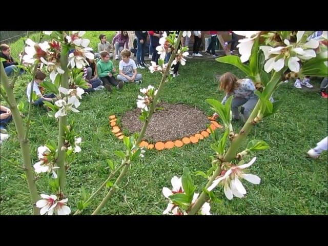 Video: Kaki, si rinnova la festa per l'albero della pace