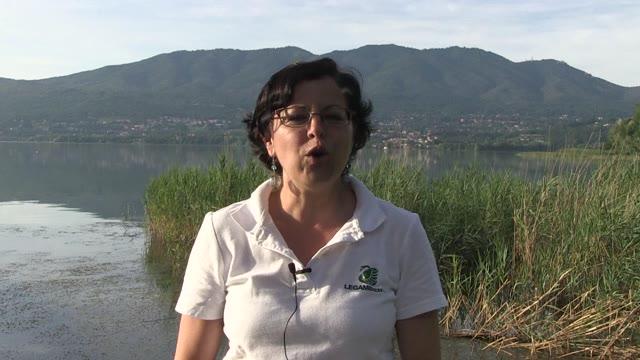 Video: I problemi del lago di Varese
