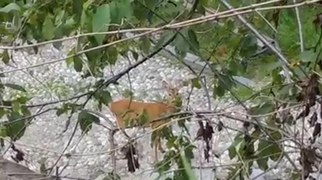 Video: Sacro Monte, avvistamenti meravigliosi
