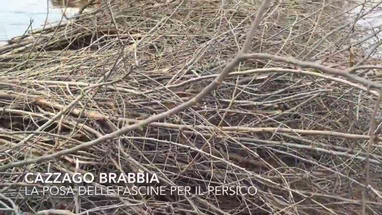 Video: I pescatori del lago costruiscono l'asilo nido dei persici