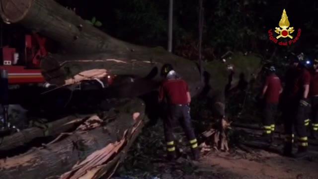Video: Il taglio della quercia nella notte