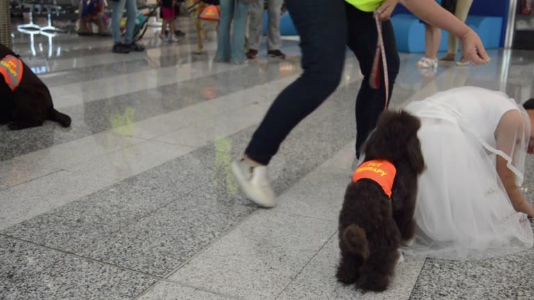 Video: Cuccioli a quattro zampe per eliminare l'ansia del volo da Malpensa