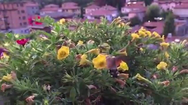 Video: Equilibrì, sui fiori di Azzate
