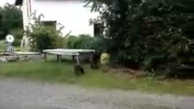 Video: I cinghiali in giardino a Varallo Pombia