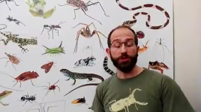 """Video: """"Incontra i tuoi vicini"""": animali e piante in mostra a Villa Mirabello"""