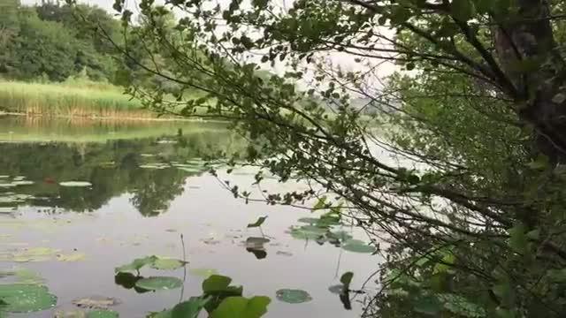 Video: Dove Biandronno sfiora l'isolino