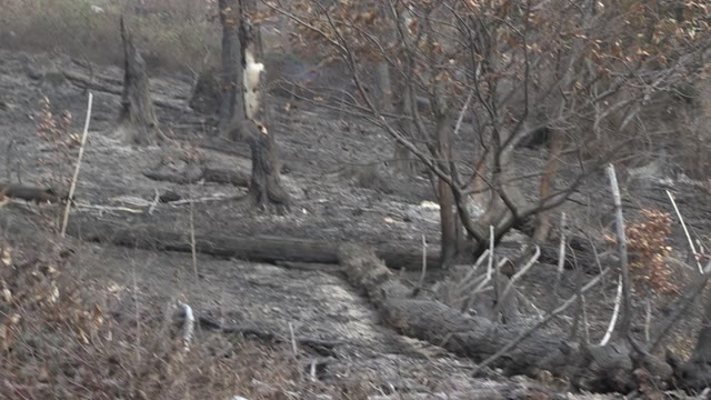 Video: Il Campo dei Fiori riparte dopo l'incendio