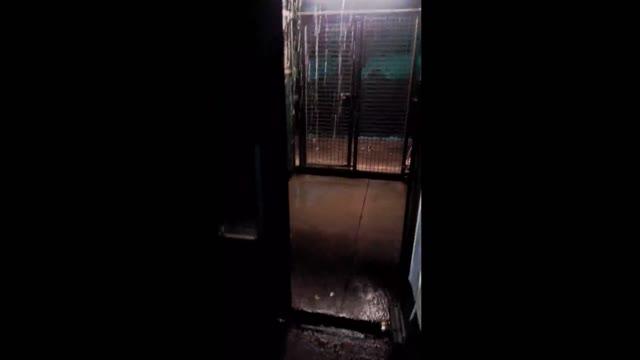 Video: Lo stato del canile a Varese