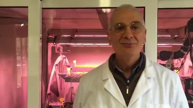 Video: Zephyr, la fabbrica delle piante