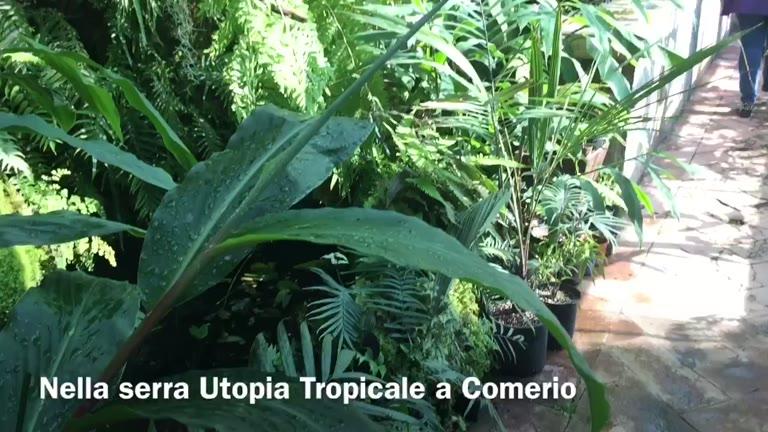 Video: Una piccola serra esotica nel cuore di Comerio