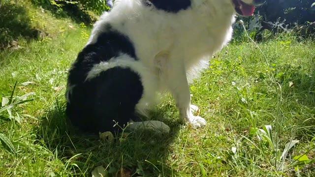 Video: Un'estate da cani: i consigli per bagni e viaggi