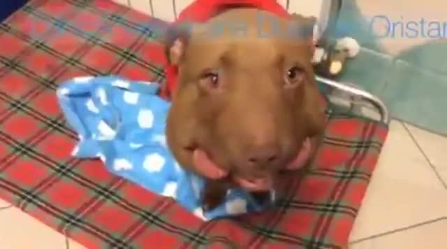 Video: Palla, simbolo degli animali maltrattati